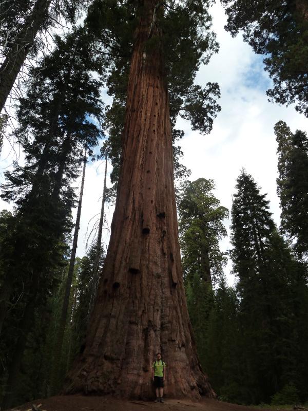 Anthropos ton metron, que significa: 'Alex es la medida de todos los árboles'