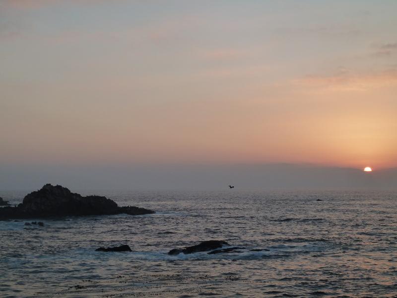 Se nota a los leones marinos aullando cual lobos por el sol que fenece... ¡y por la rasca!
